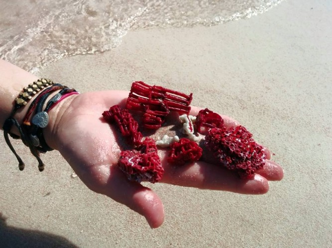 Red coral from pink sand beach in Indonesia