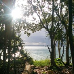 Sun through the trees over the ocean in Australia
