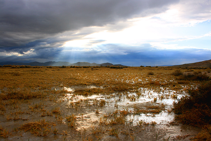 a rainy marsh in nevada