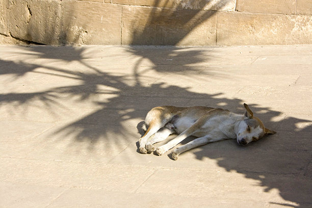 Dog sleeping in shadow