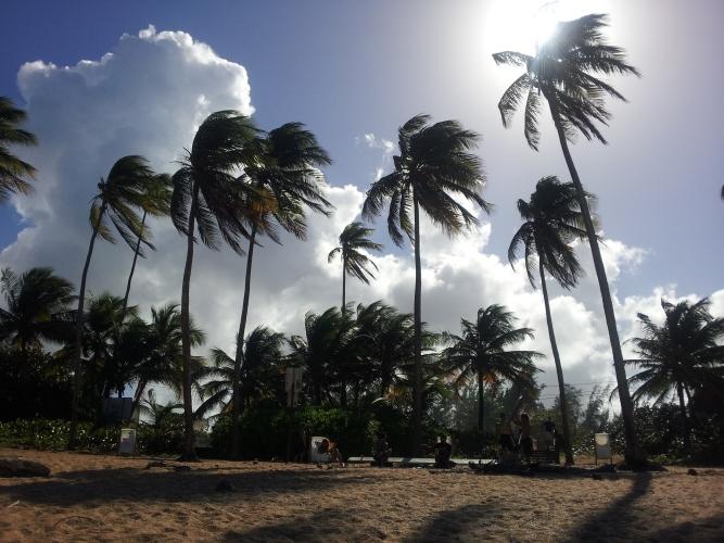 beach palm trees puerto rico