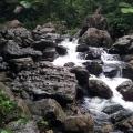 rain forest el yunque puerto rico