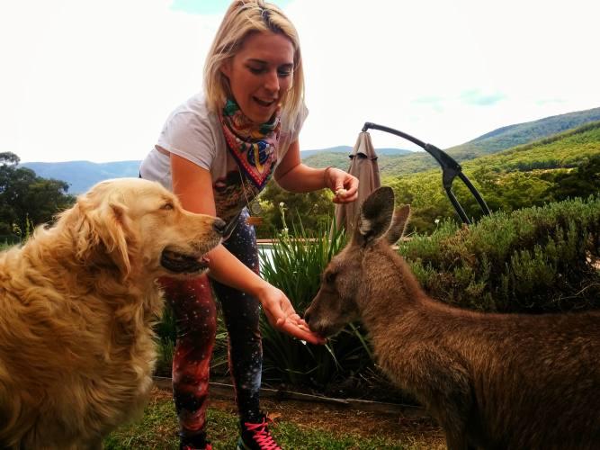 girl feeding kangaroo