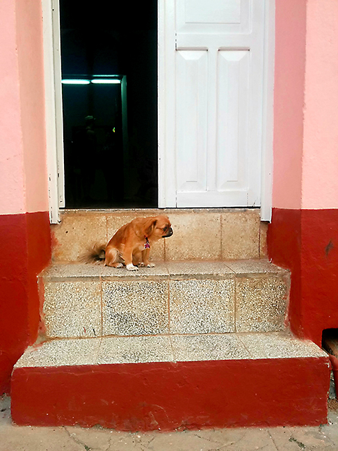 Cuba_Dog_Trinidad_EDITweb